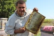 Продам оптом мёд 2014 года